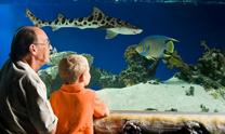 Portland Aquarium